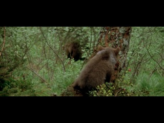 """""""�������"""" / """"L'ours"""" / """"The Bear"""" (1988) �� ������ ������� ������� ������� «������»"""